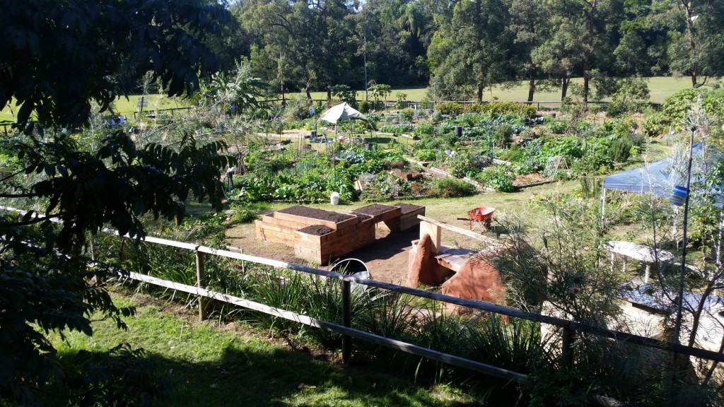 The completed Raised Gardens Beds are a great addition to the garden.