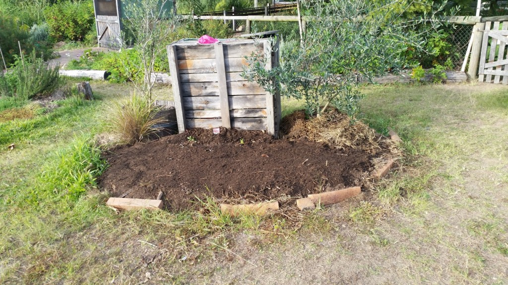 olive-tree-compost