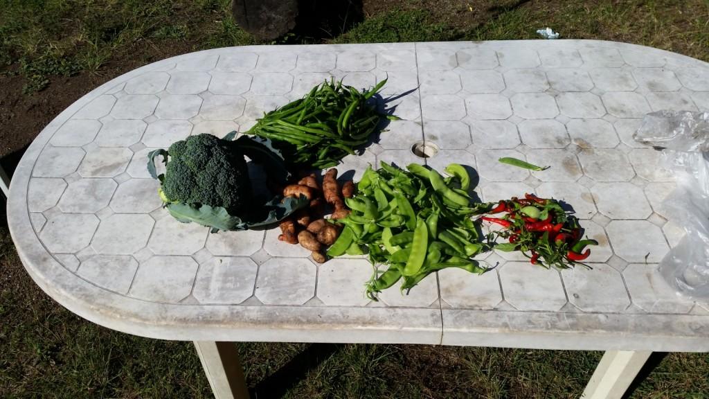 Rolf's Harvest