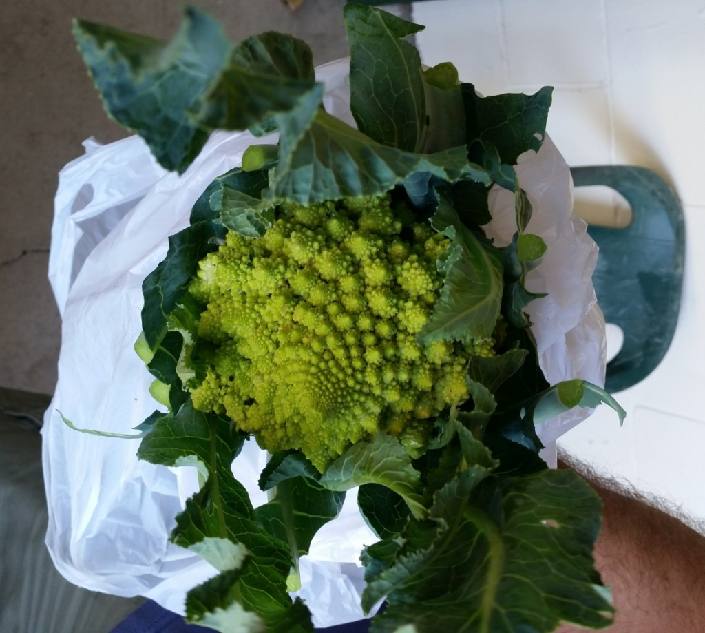 Steve's Romanesco Broccoli