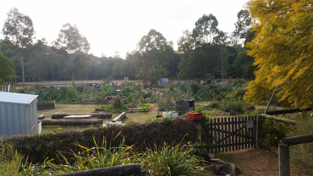 Another glorious morning at the Yoorala St Community Garden