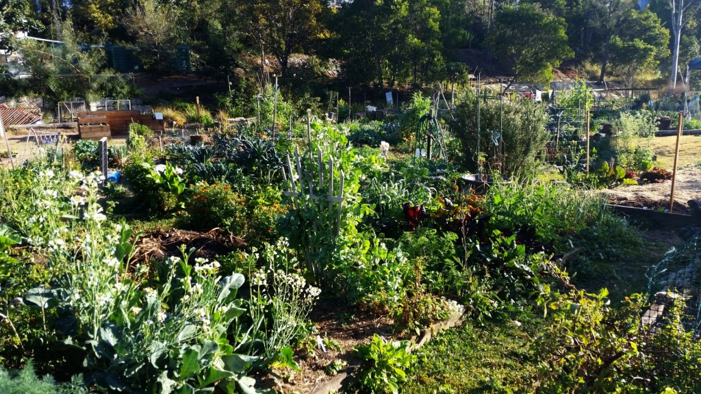 community-garden-morning