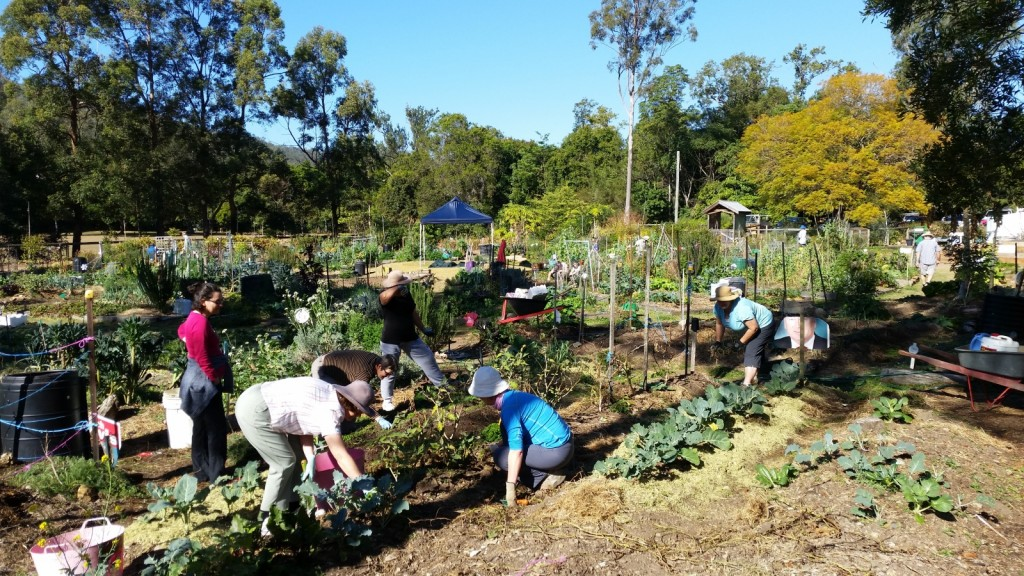 Working in the communal Vegetable Garden