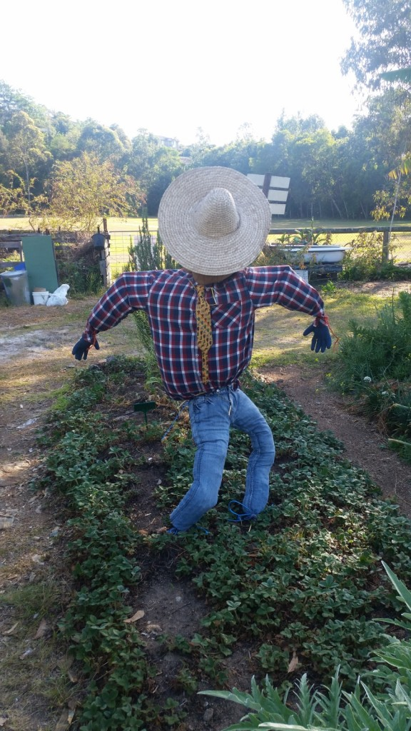 New Scarecrow  thanks to the garden kids